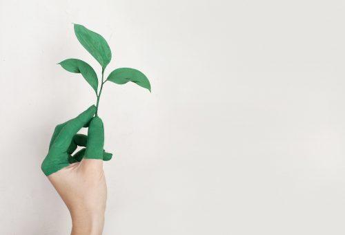 ökologisch